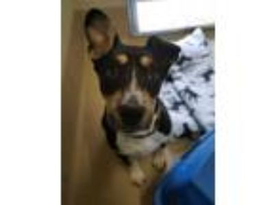 Adopt Jet a Mixed Breed