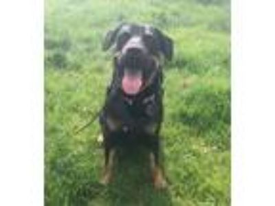 Adopt Ava - Courtesy Listing a Black - with Brown, Red, Golden