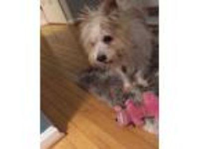 Adopt Dyno a Terrier
