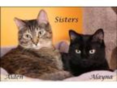 Adopt Alayna a All Black Domestic Shorthair / Mixed cat in Salt Lake City