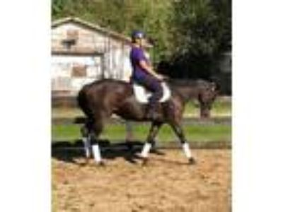 Adopt Jane a Thoroughbred