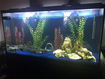 70 Gallon fish tank