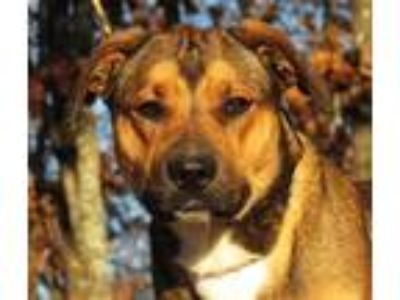 Adopt Noelle a Beagle / Mixed dog in Osage Beach, MO (24214888)