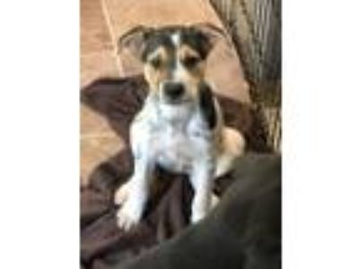 Adopt Terry a Black - with Brown, Red, Golden, Orange or Chestnut Mixed Breed