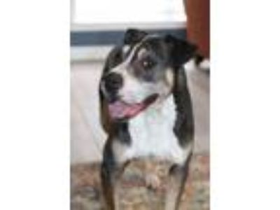 Adopt NickLaus a Mixed Breed