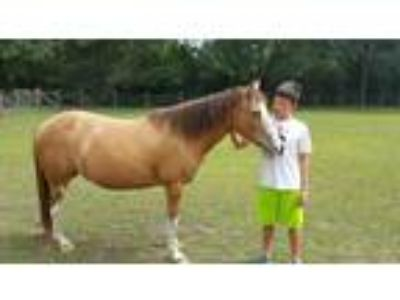 Adopt Bootsy a Paint Paint/Pinto horse in Cantonment, FL (12353478)