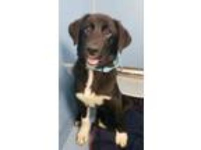 Adopt Frankie a Black Border Collie / Mixed dog in Bloomingdale, IL (25523447)