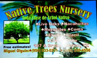 need some plants or palms or tree call NATIVE TREES NURSERY 9565330231 (mission tx)