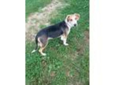 Adopt RJ a Hound (Unknown Type) / Mixed dog in Hanover, PA (22573586)