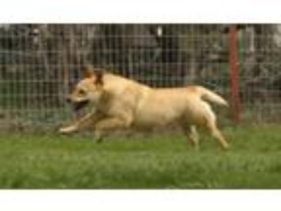 Craigslist - Animals and Pets for Adoption Classifieds in Durango