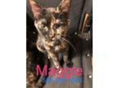 Adopt Maggie and Molly a Tortoiseshell Calico (short coat) cat in Rochester