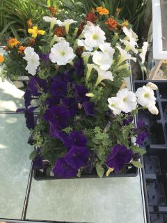 Petunia s and other flowers upon request , please feel free and hit me up