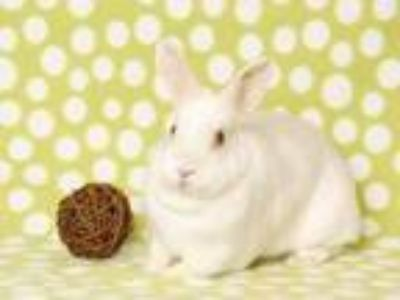 Adopt JASMINE* a White Other/Unknown / Mixed rabbit in Santa Cruz, CA (24141325)