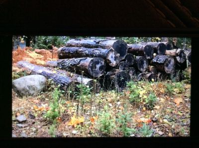 Firewood Free logs.  Good Condition!