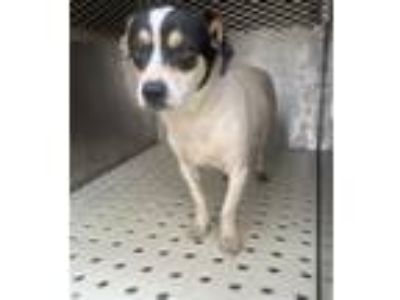 Adopt Jackson a Terrier (Unknown Type, Medium) / Mixed dog in Birmingham