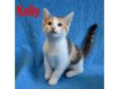 Adopt Kelly a Calico or Dilute Calico Calico (short coat) cat in Mays Landing