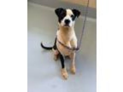Adopt Maddox a White - with Black Mixed Breed (Medium) / Mixed dog in Concord