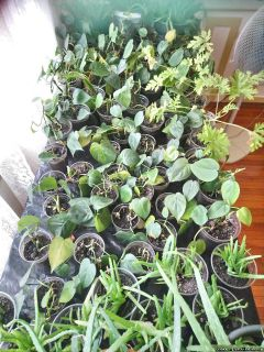 Garage Sale - Lots of House Plants - Thursday 6-28 thru Sunday 7-1