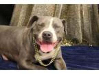 Adopt Girlfriend a Pit Bull Terrier