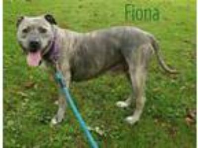 Adopt FIONA a American Staffordshire Terrier, Mixed Breed