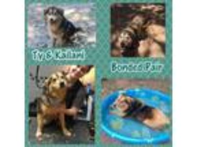 Adopt Kailani and Ty a Collie, Husky