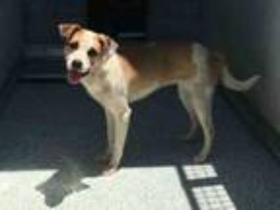 Adopt PENNY a Parson Russell Terrier, Mixed Breed