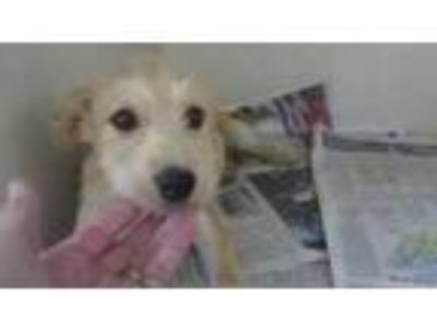 Adopt The Scruffy Kids L a Terrier (Unknown Type, Medium) / Mixed dog in Homer