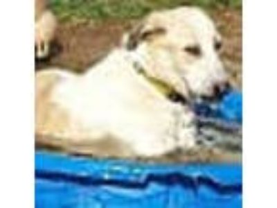 Adopt Sonic a Mixed Breed