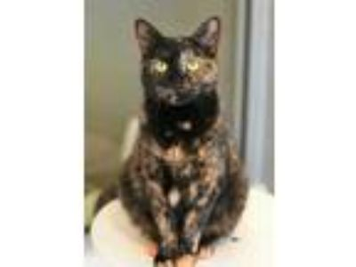 Adopt Tilda a All Black Domestic Shorthair / Domestic Shorthair / Mixed cat in