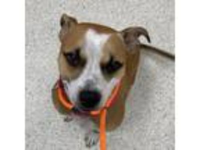 Adopt Chewy a Mixed Breed