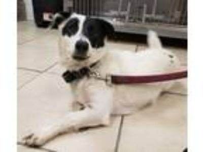 Adopt Nola/AC-20465B a Terrier (Unknown Type, Small) / Mixed dog in Greeneville