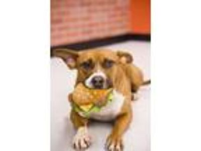 Adopt Magic- Please Meet me! a Terrier, Hound