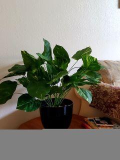 Artificial plant w/ black vase