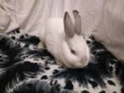 Adopt Aria a Other/Unknown / Mixed rabbit in Idaho Falls, ID (24141782)