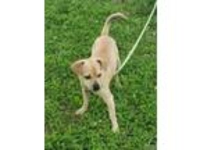 Adopt Franklin Foster Needed 8/24 a Terrier