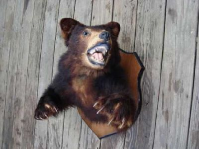 Mounted Bear Head