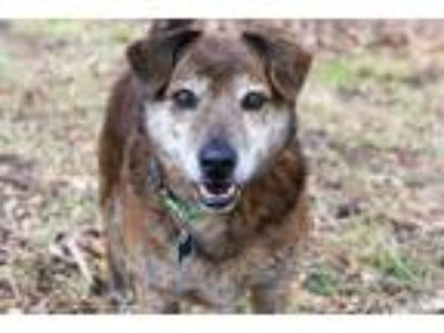 Adopt Donny a Mountain Cur