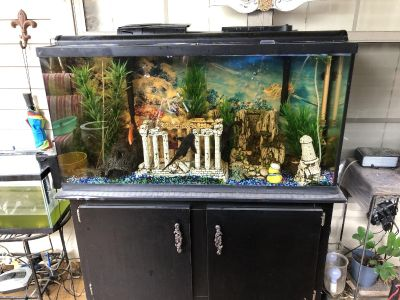 65 gallon fish tank with stand and fish