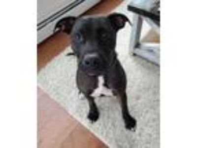 Adopt Z Courtesy Post - Lucy a Labrador Retriever, Terrier