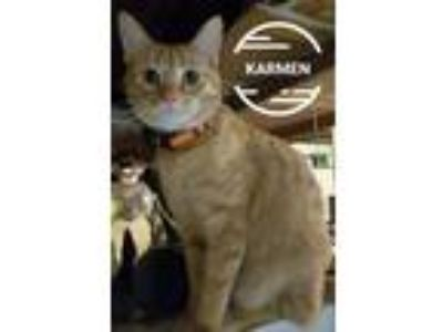 Adopt Karmen a Orange or Red Domestic Shorthair (short coat) cat in Irwin