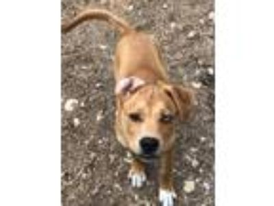 Adopt Layla a Tan/Yellow/Fawn Foxhound dog in Lavalle, WI (25546913)