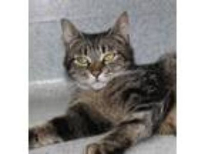 Adopt Wendy a All Black Domestic Shorthair / Domestic Shorthair / Mixed cat in