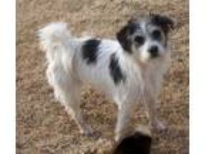 Adopt Anne/NOT FOR ADOPTION a Terrier