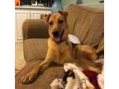 Adopt TYE a German Shepherd Dog