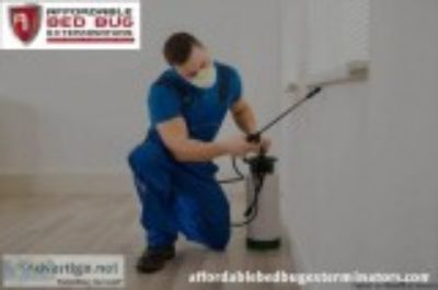 Use Best Bed Bug Exterminator Services at afforable cost