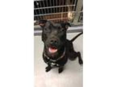 Adopt Maggie a Black Mixed Breed (Medium) / Mixed dog in Worcester