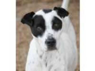 Adopt Cherry Hill a Black - with White Terrier (Unknown Type