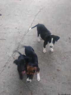 Puppies/need good homes