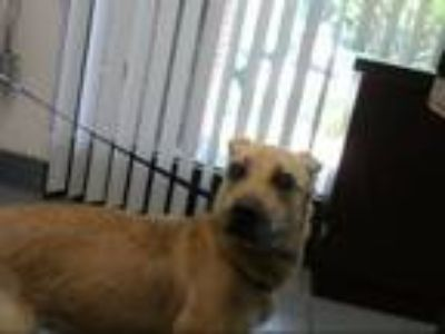 Adopt SAVANNAH a German Shepherd Dog, Mixed Breed