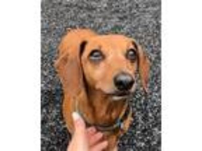 Adopt a Terrier (Unknown Type, Small) / Mixed dog in Quakertown, PA (25599383)